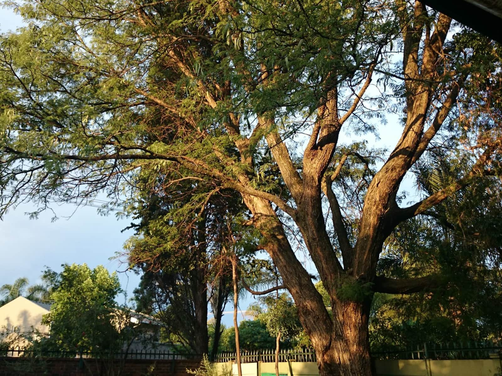 Housesitting assignment in Centurion, South Africa