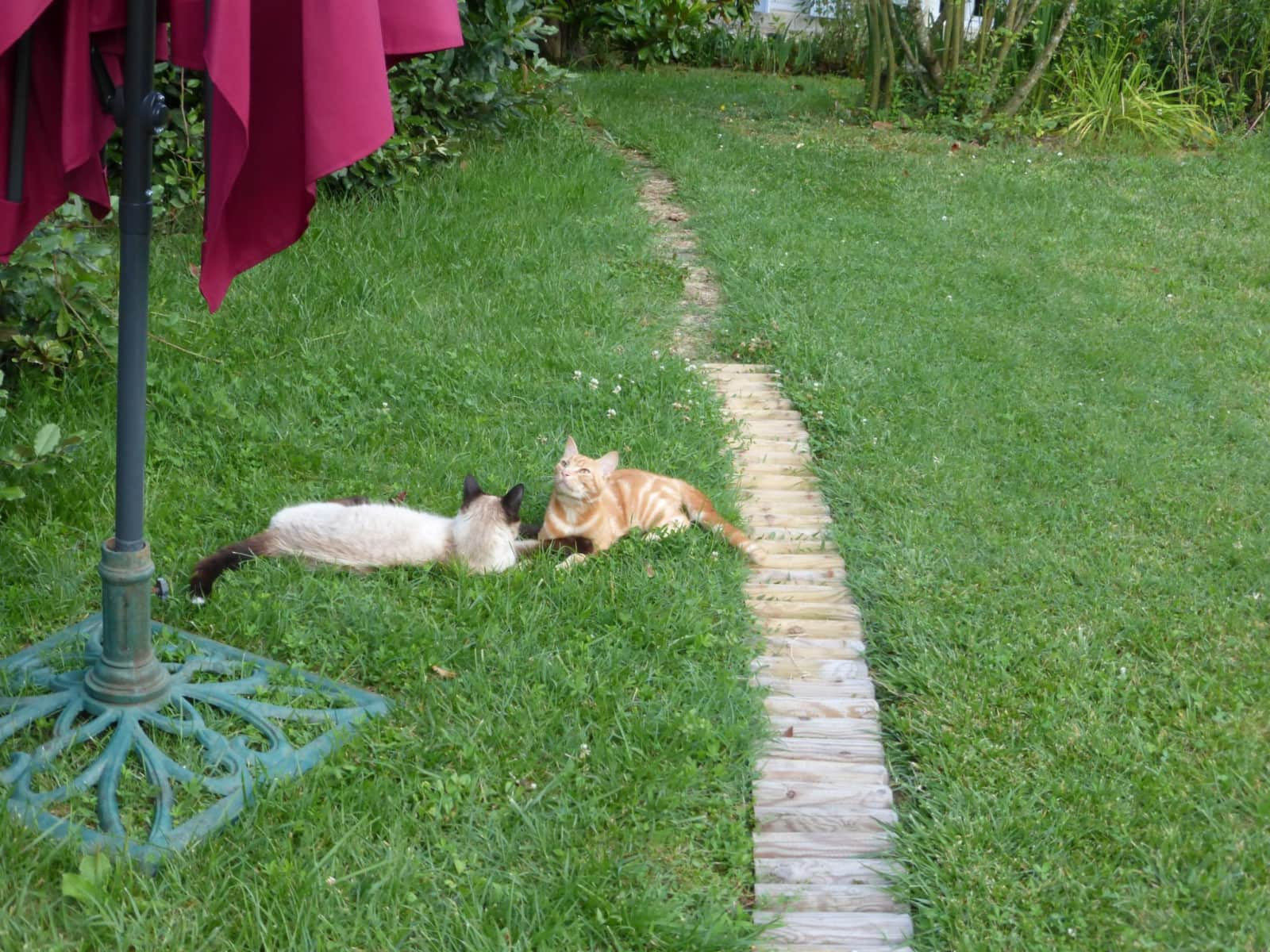 Housesitting assignment in Bordeaux, France