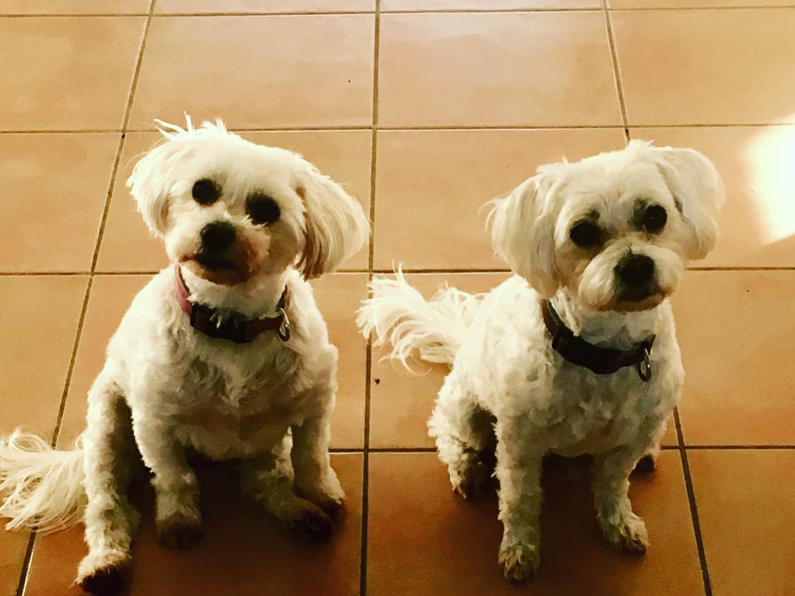 Kim & Gary from Gold Coast, Queensland, Australia