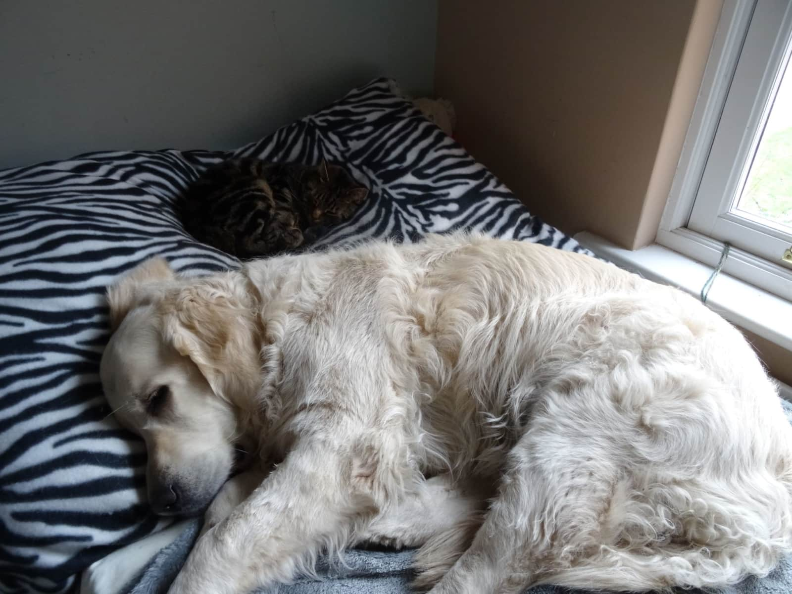 Housesitting assignment in Camberley, United Kingdom