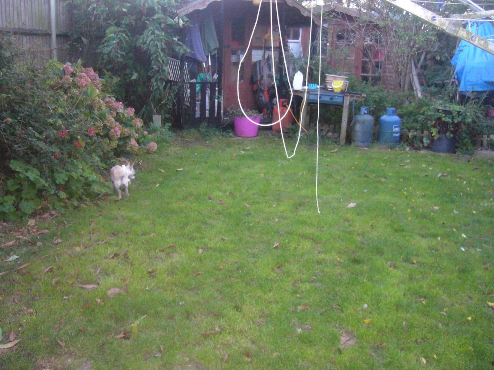 Housesitting assignment in Ormesby St Margaret, United Kingdom
