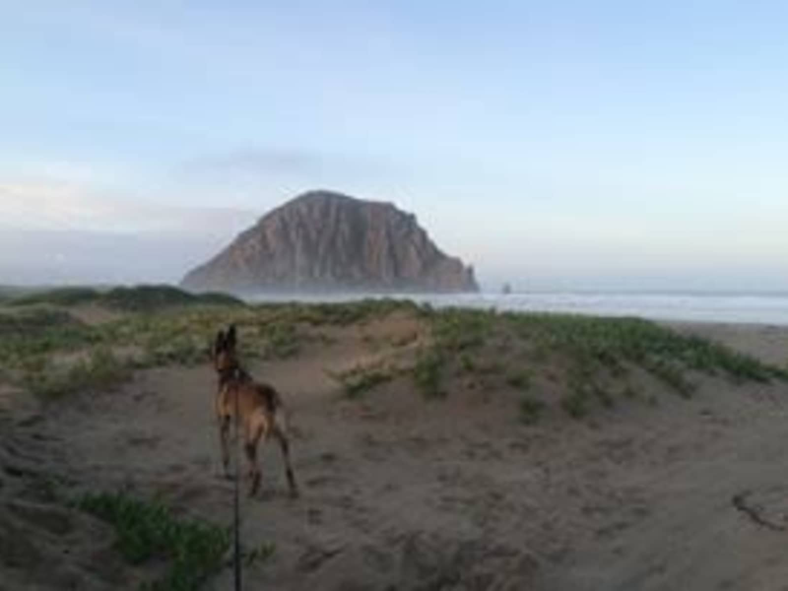 Housesitting assignment in Morro Bay, California, United States