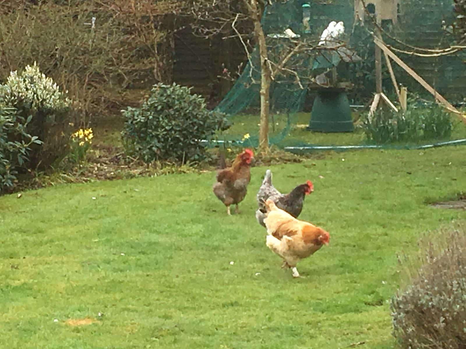 Housesitting assignment in Sarisbury Green, United Kingdom