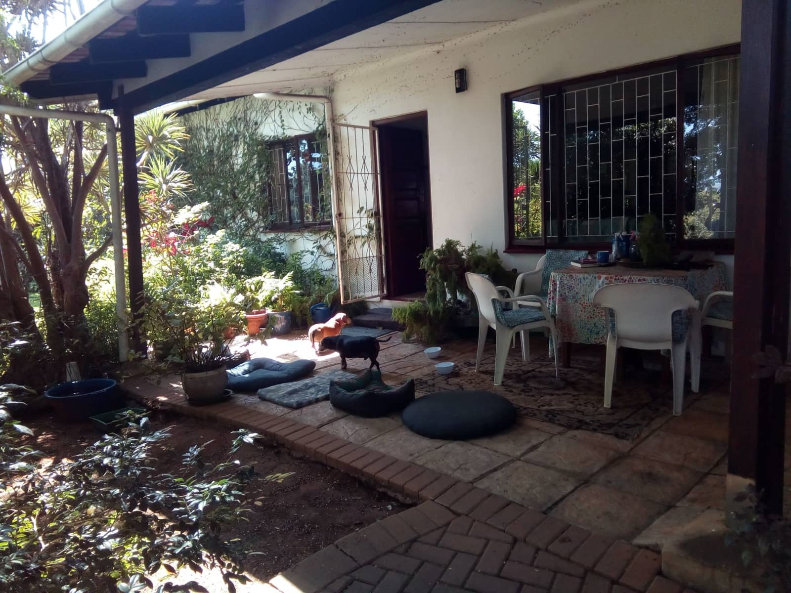 Housesitting assignment in Durban, South Africa