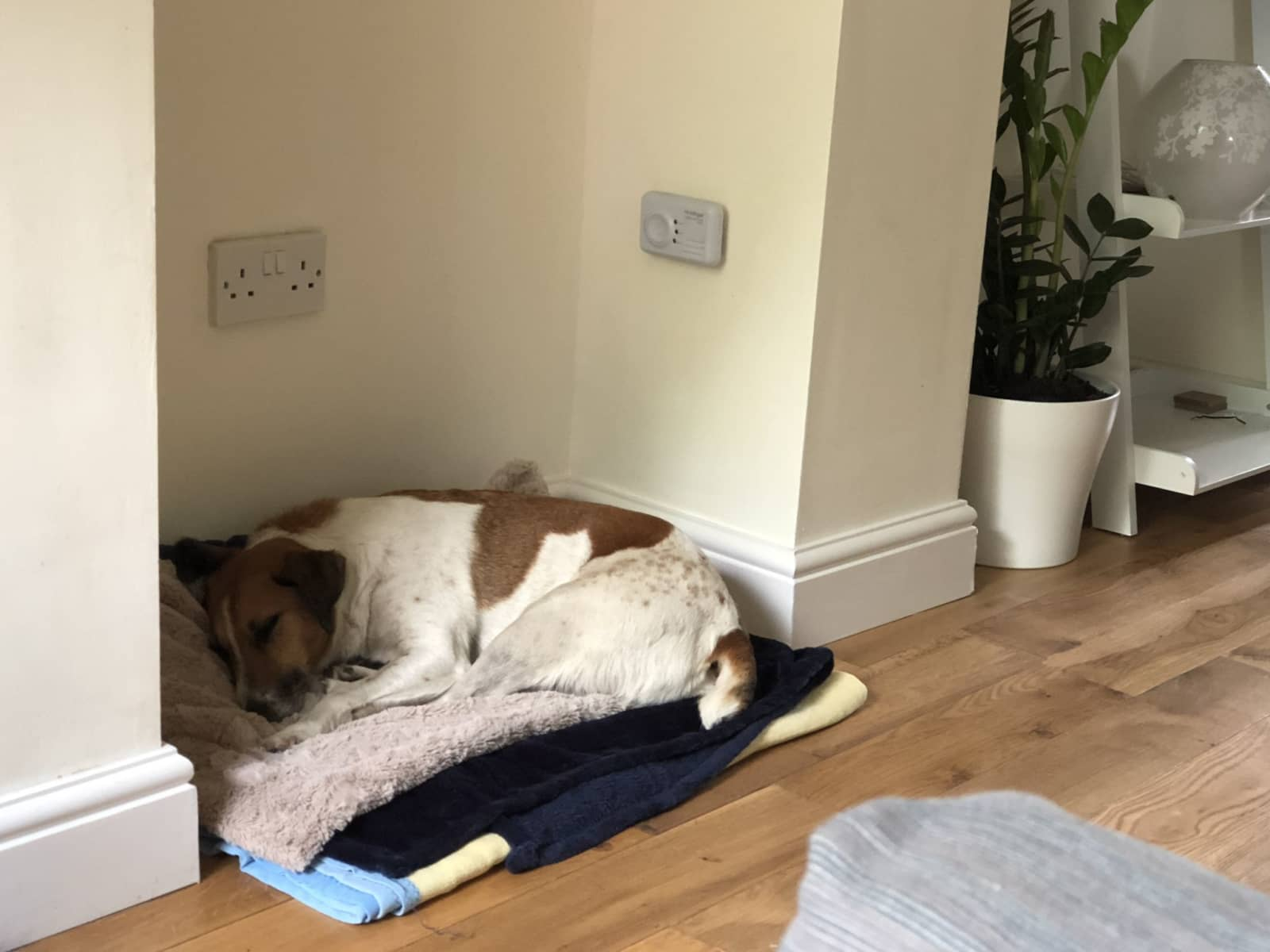 Housesitting assignment in Shalford, United Kingdom