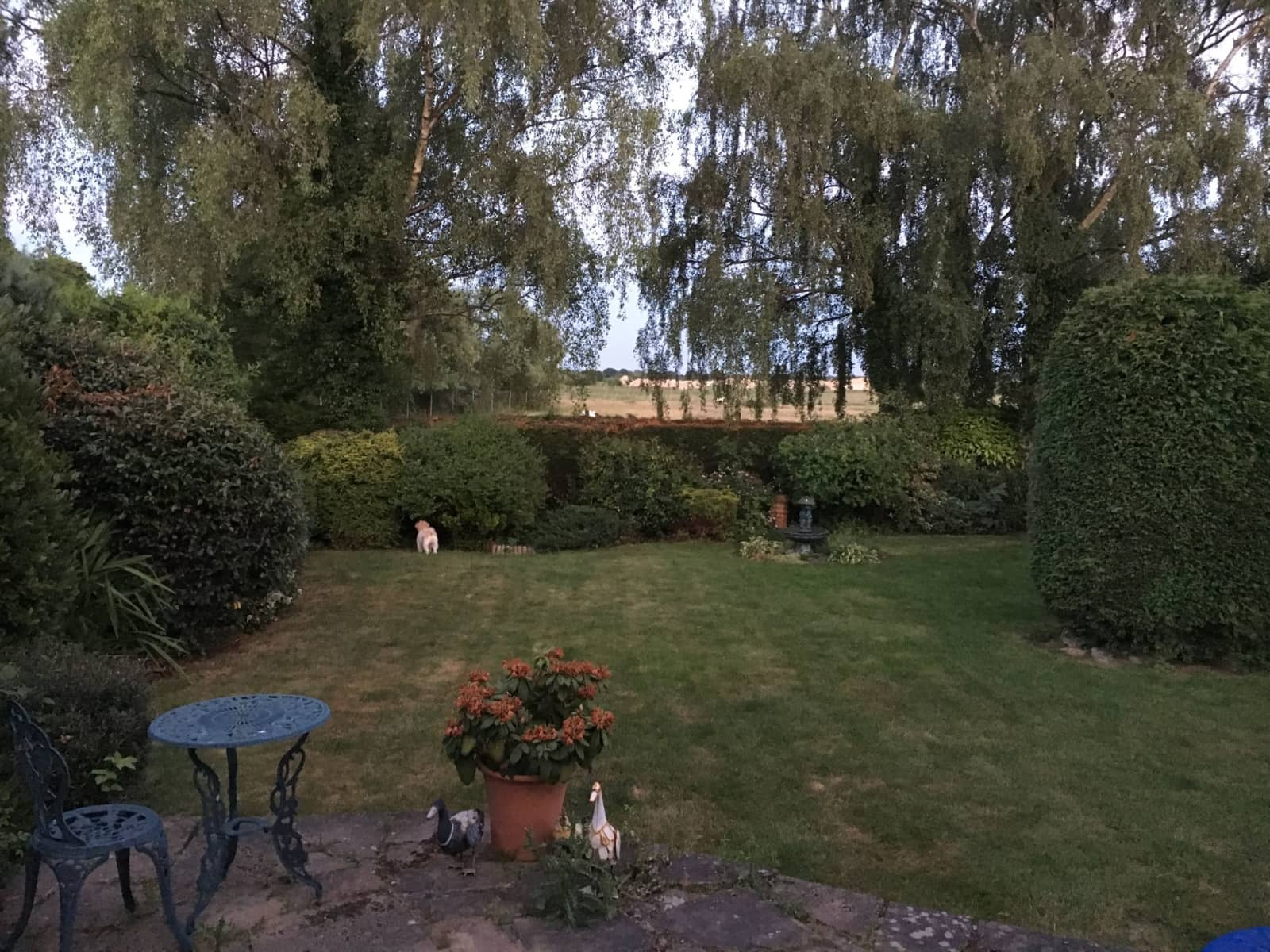 Housesitting assignment in Doncaster, United Kingdom