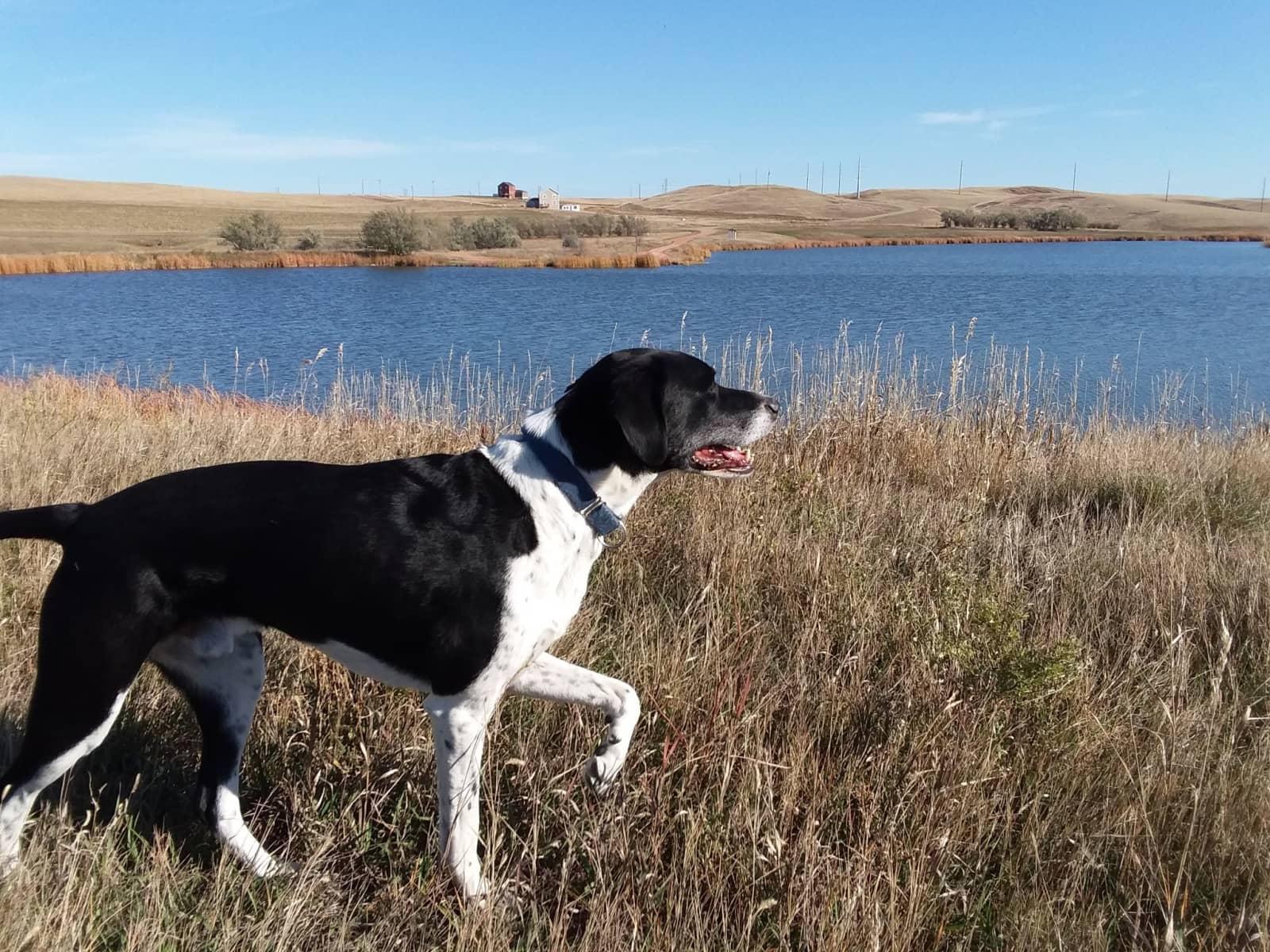 Housesitting assignment in Watford City, North Dakota, United States