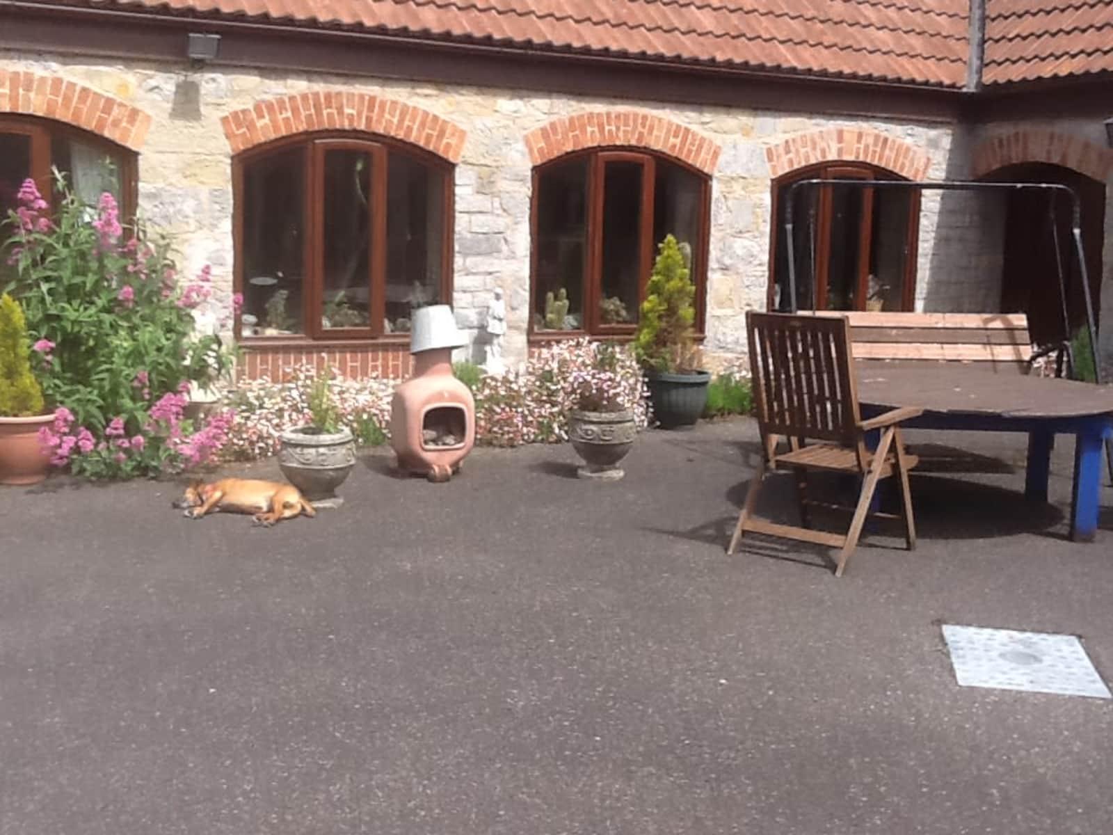 Housesitting assignment in Bridgwater, United Kingdom