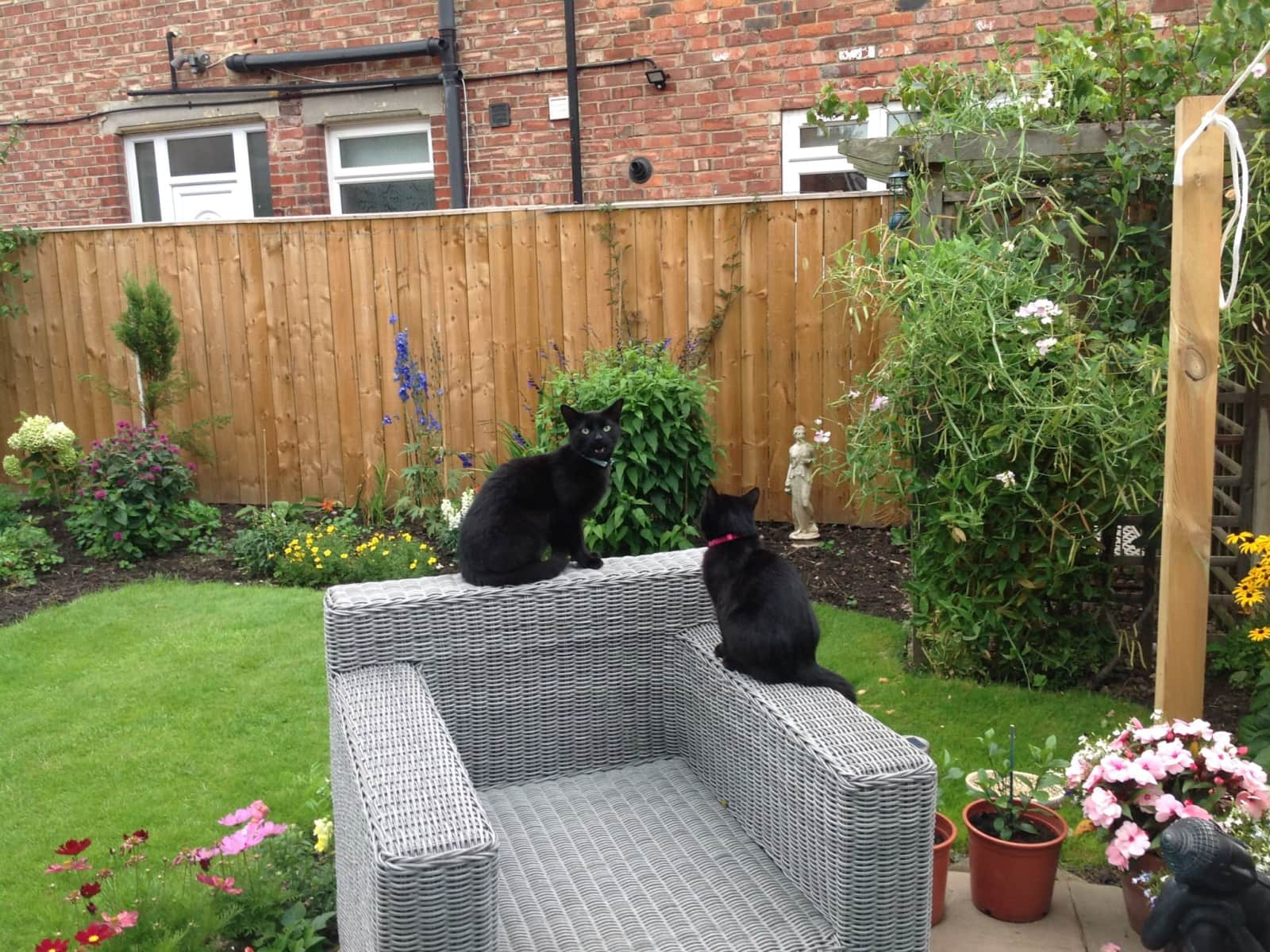 Housesitting assignment in Middlesbrough, United Kingdom