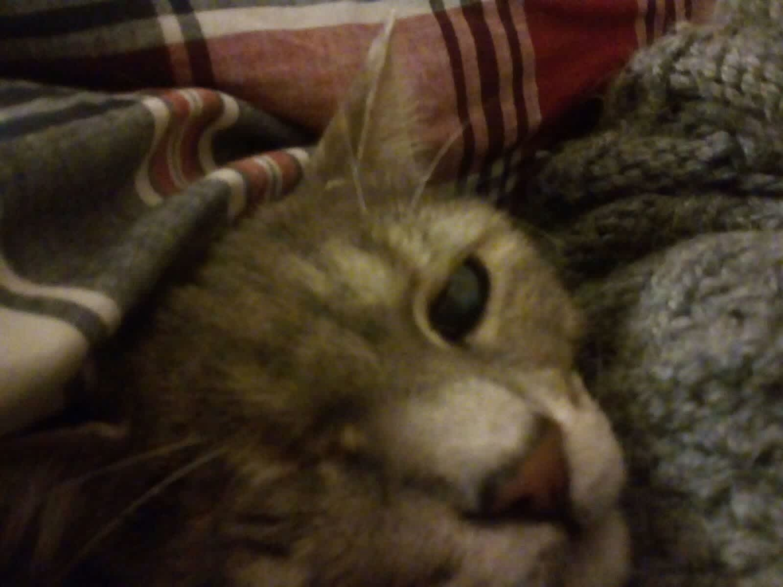 Housesitting assignment in Kalívai, Greece