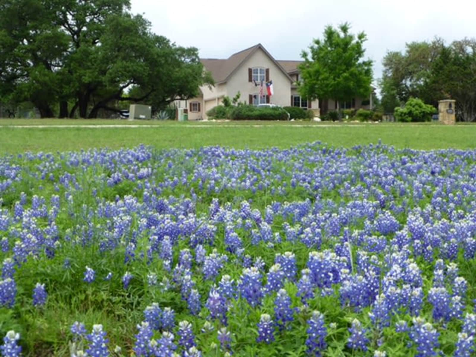 Housesitting assignment in New Braunfels, Texas, United States