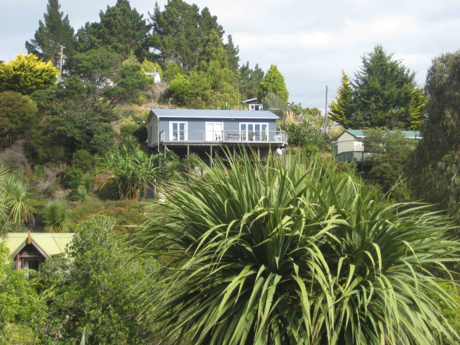 Housesitting Assignment In Waikopua, New Zealand