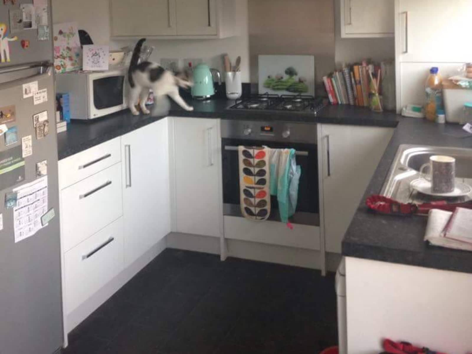 Housesitting assignment in Bathgate, United Kingdom