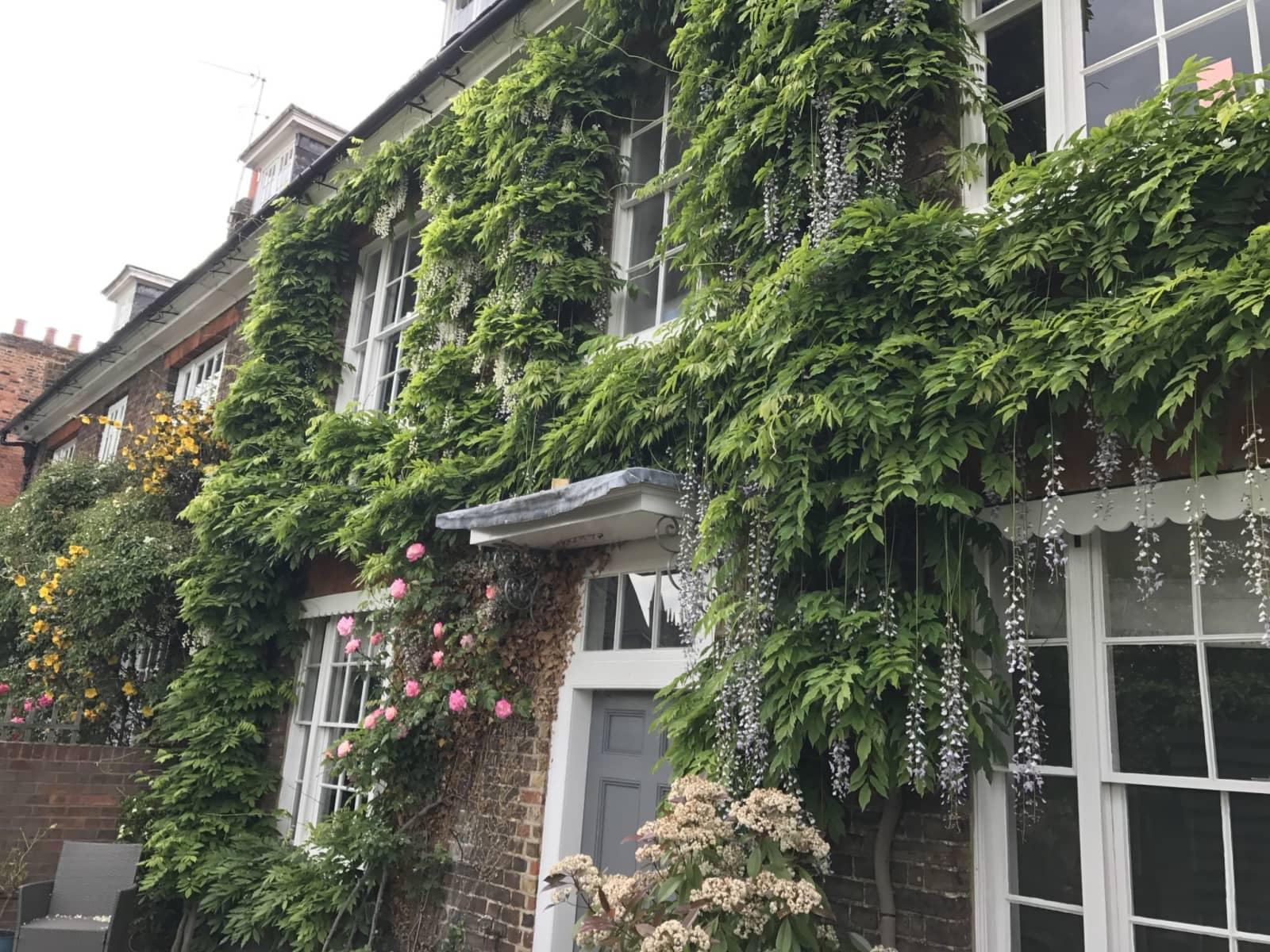 Housesitting assignment in Hertford, United Kingdom