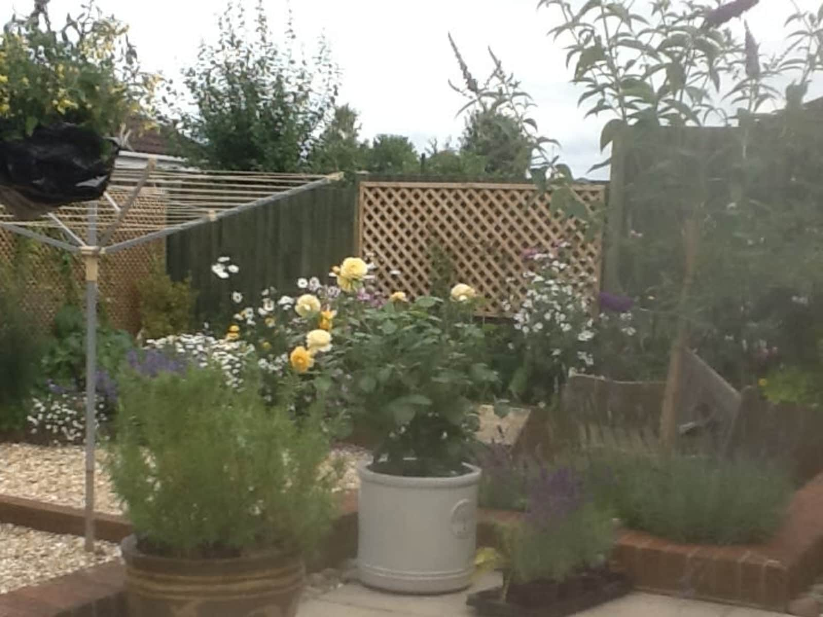 Housesitting assignment in Wincanton, United Kingdom