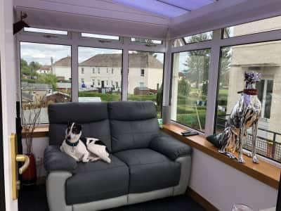Caring and Tidy housesitter required for 2 loving dogs and an African Grey Parrot