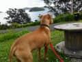 Housesitting assignment in Coromandel, New Zealand - Image 1