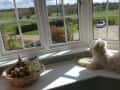 Housesitting assignment in Evesham, United Kingdom - Image 1