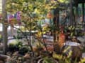 Housesitting assignment in La Crescenta-Montrose, California, United States - Image 2