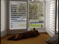 Housesitting assignment in Queniborough, United Kingdom - Image 2