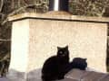Housesitting assignment in Inverurie, United Kingdom - Image 1