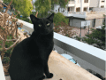 Housesitting assignment in Palma, Spain - Image 2