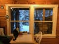 Housesitting assignment in East Calais, Vermont, United States - Image 2
