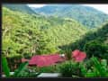 Housesitting assignment in Uvita, Costa Rica - Image 1