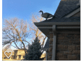 Housesitting assignment in Lincoln, Nebraska, United States - Image 4