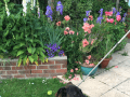 Housesitting assignment in Derby, United Kingdom - Image 1