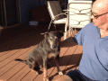 Housesitting assignment in Alice Springs, Northern Territory, Australia - Image 1