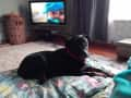 Housesitting assignment in Foxton Beach, New Zealand - Image 2
