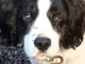 Housesitting assignment in Ross on Wye, United Kingdom - Image 1