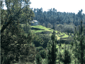 Housesitting assignment in Carregal do Sal, Portugal - Image 1