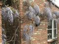 Housesitting assignment in Earls Barton, United Kingdom - Image 1