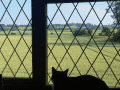 Housesitting assignment in Spilsby, United Kingdom - Image 2