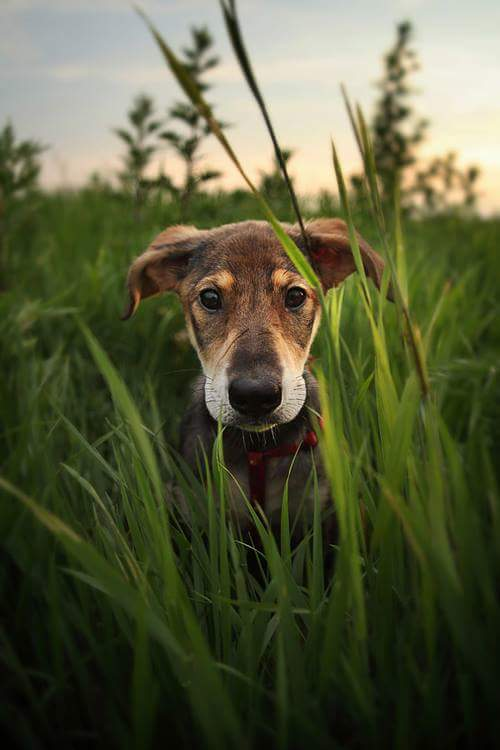 Wag & Love Pet Food