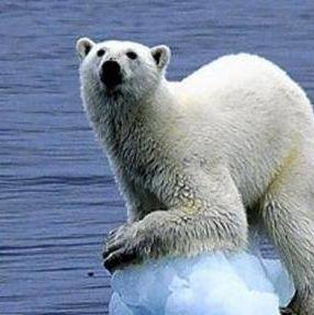 Pavlov's Bear
