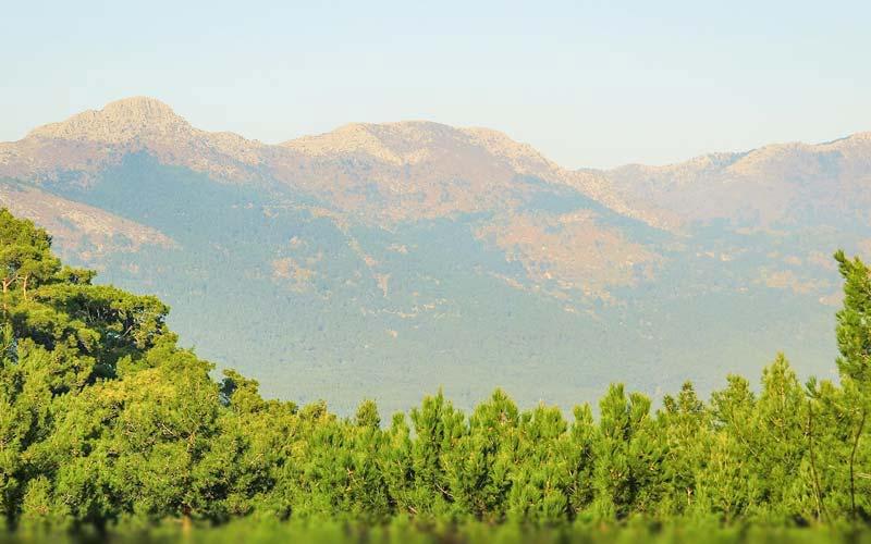 Kaz Dağları Edremit