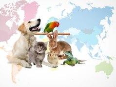 evcil hayvanla seyahat