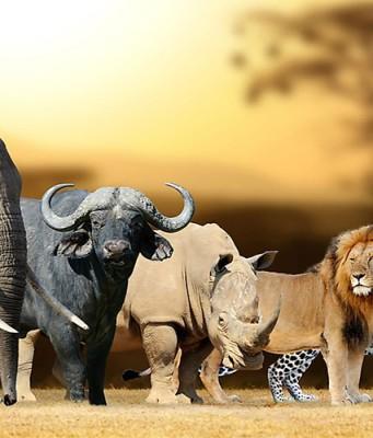 afrika 5 buyukler