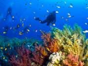 Elphinstone-Reef-Kizildeniz