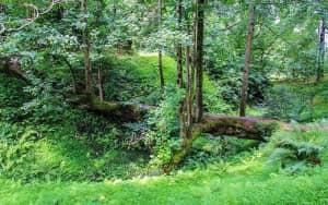 Batumi-Botanical-Park