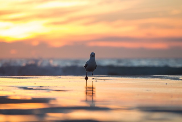 Day dreaming seagull :)
