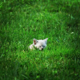 Grass kitten pouncing sleeping open field cute adorable loving baby kitten playful animal tiny outside small pretty happy curious playing ears tall grass weeds laying