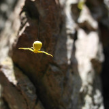 I was out rock climbing and saw this little guy.  In Post Falls Idaho.