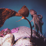 Here is another shot from my trip to Monterey Bay Aquarium :)