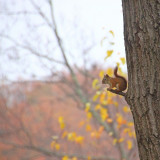 Red squirrel perch