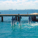 Dolphins jumping in Isla Mujeres Mexico