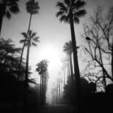 The sun pushes thru a foggy morning in Southern California